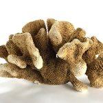 Astro Gallery de pierres précieuses de chat Paw Corail–5. 11,3kilogram