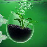 Robluee Pot en Verre pour Planter des Plantes Poisson Décoration d'Aquarium Petite Tasse en Verre