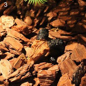 hwangli Résine Tête de Mort Cacher de Décor d'aquarium Terrarium Reptile Ornaments Outil, 3#, Multicolore