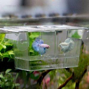 Ogquaton Réservoir de Poissons d'aquarium Guppy Double élevage d'élevage Piège à couvoirs Écloserie pour Poissons Malades ou gestants 12cm x 7cm x 7cm Durable et Pratique
