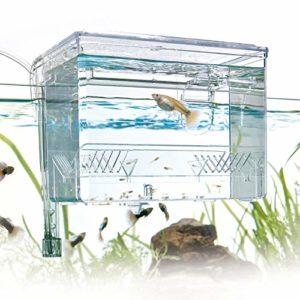 Aquariums d'élevage